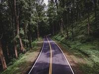 black asphalt road between green trees during daytime 白天绿树间的黑色沥青路