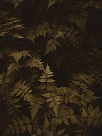 brown and green leaves on brown soil 棕色土壤上的棕色和绿叶